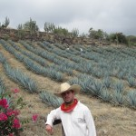 agave fields 150x150 El Jimador Blanco   (the Gringo Tequila harvester)
