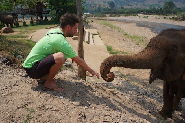 Volunteering with sick and injured elephant at Elephant Nature Park in Thailand