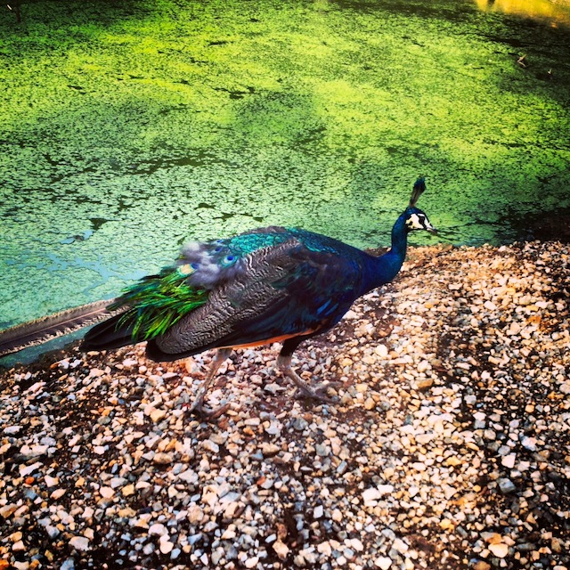 I think sip a morning fresh gourmet nescafe and see this guy by the lagoon
