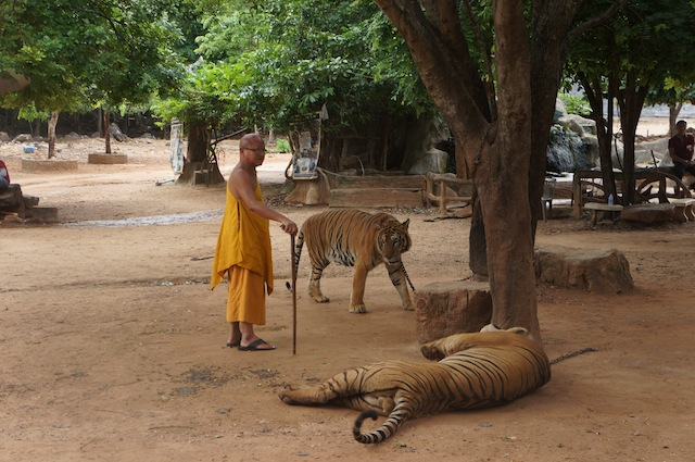 tiger temple abbot