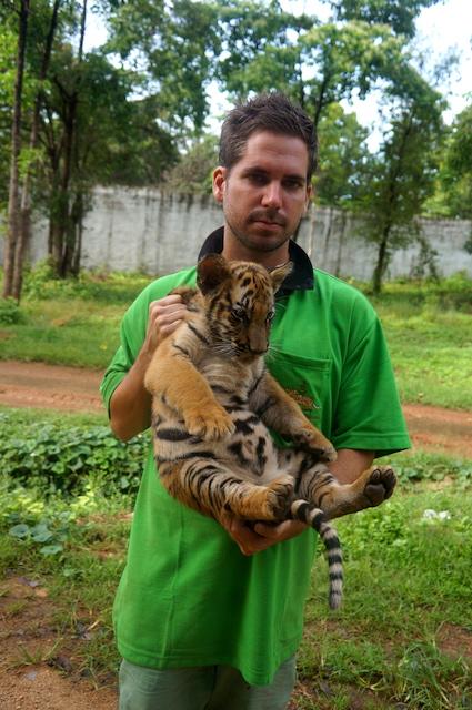 tiger temple volunteer blogger