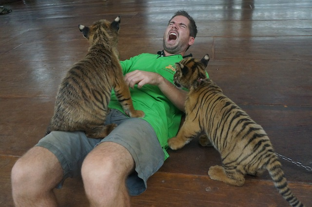 Note: these tigers are innocent. And are the much smaller versions of the ferocious beast who bite me