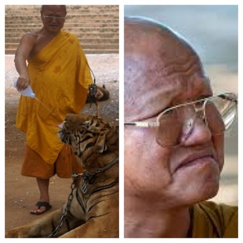 tiger temple monk
